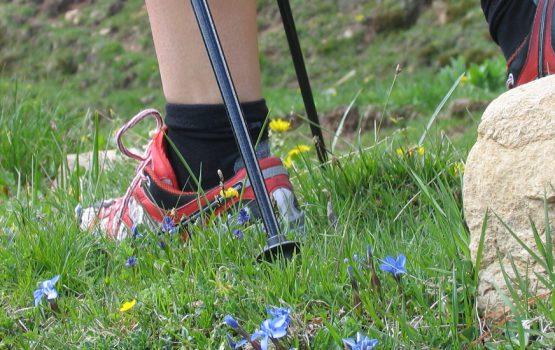 Percorsi di Nordic Walking con le Guide in Trentino