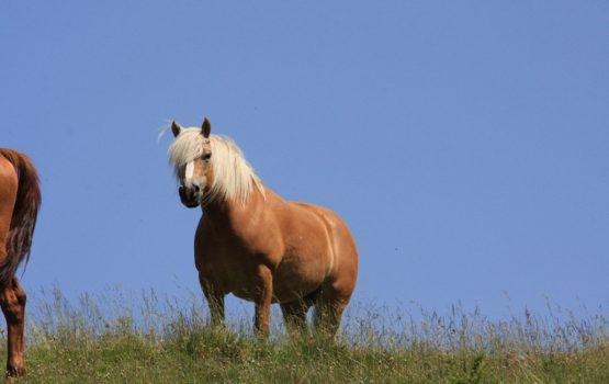 Vacanze a Cavallo sulle Dolomiti in Estate