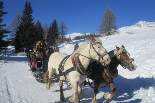 Slitta con i Cavalli nelle Doliomiti