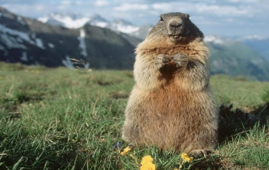 marmotta-Marmot-1440x9001