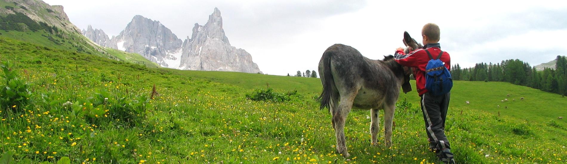 Escursioni in Malga in Trentino
