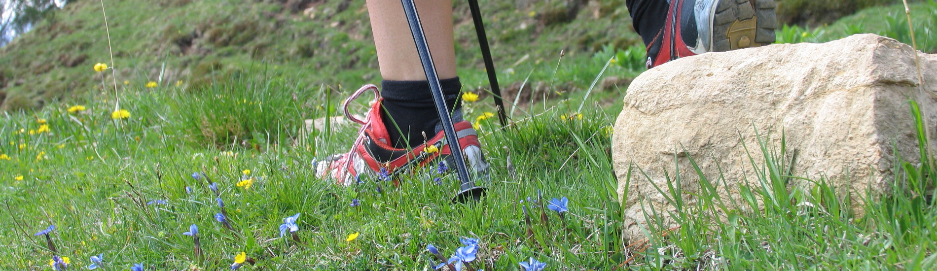 Percorsi di Nordic Walking con le Guide in Trentino