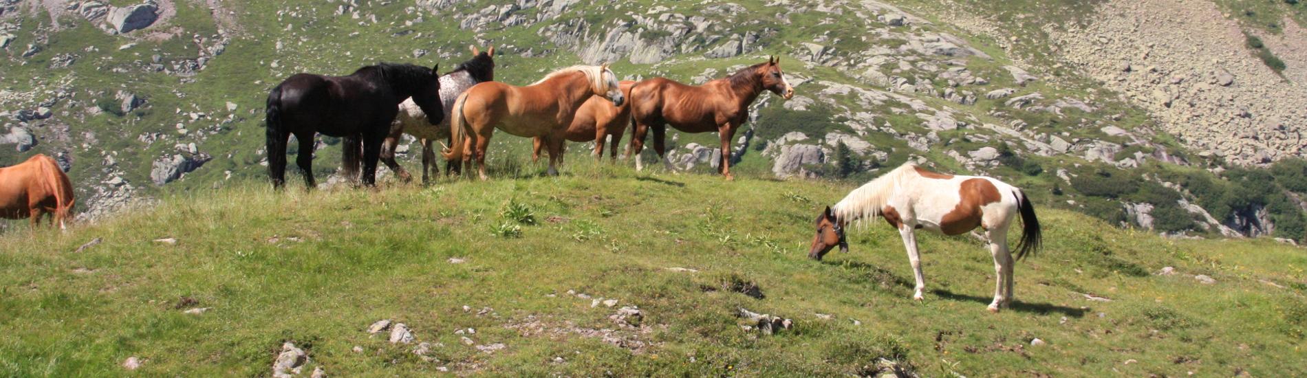 Vacanze a Cavallo in Trentino Alto Adige