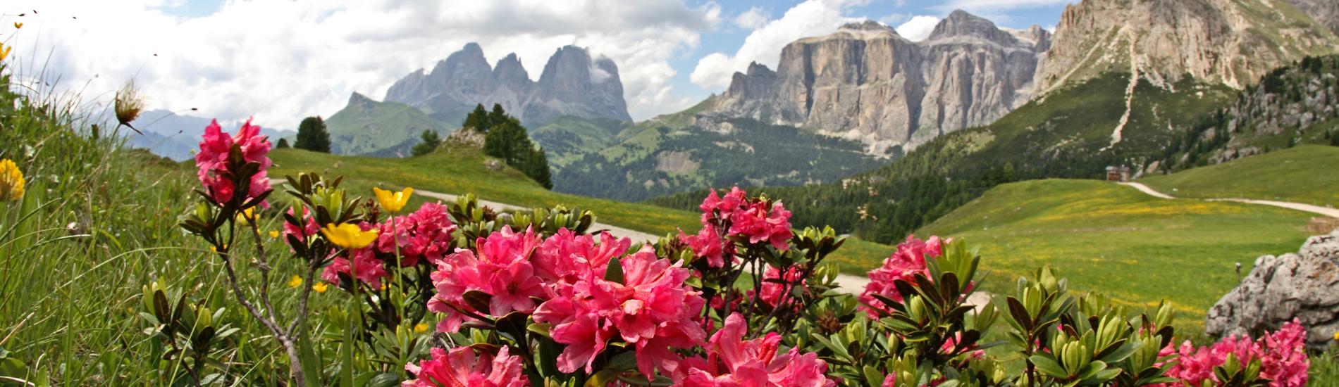 Vacaze Estive in Trentino Alto Adige