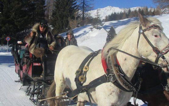 Gite sulla Carrozza trainata dai Cavalli