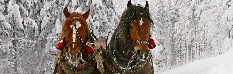escursioni-sulla-neve-8