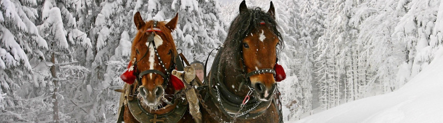 Tra la neve in Carrozza
