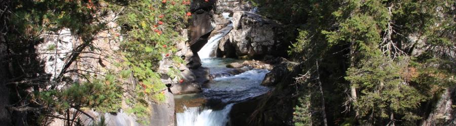Natura Incontaminata nel Parco Naturale di Paneveggio