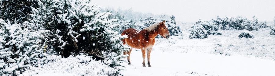 Passeggiate a cavallo sulla neve | Hotel La Grotta